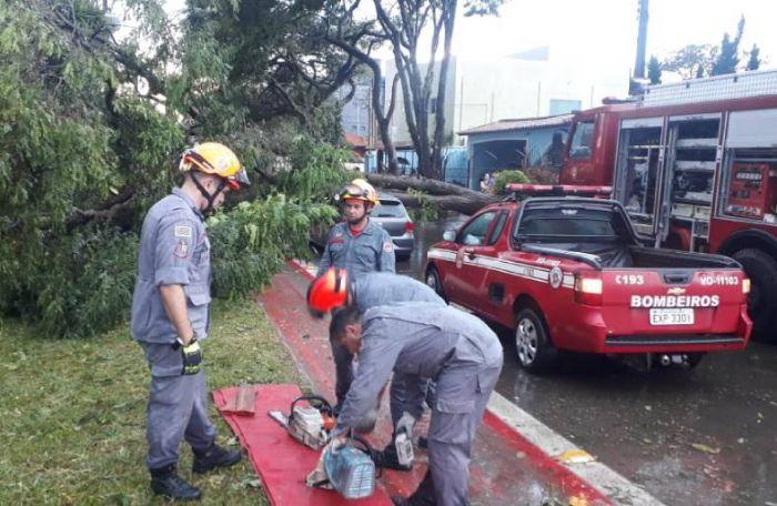 Bombeiros trabalham para a retirada de uma árvore caída sobre um automóvel, no Parque Industrial