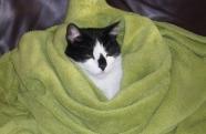 Faz mal dar banho nos pets em dias muito frios