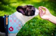 Pets podem fazer uso de suplementos alimentares