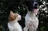 Doenças respiratórias em pets aparecem com maior frequência no inverno