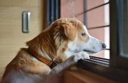 Saiba como ter uma boa convivência tranquila com seu Pet no condomínio.