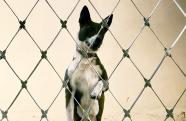 Prefeitura de Pinda inova com castração e microchipagem de cães e gatos