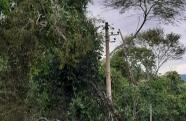 Prefeitura de Pinda realiza ação de desobstrução de vias na área rural