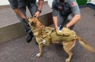 Fatec SJC desenvolve colete tecnológico para cães de resgate