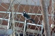 Homem é multado em R$3,4 mil pela Polícia Ambiental por manter aves em cativeiro em Guaratinguetá