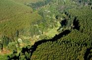 Comissão das Nações Unidas reconhece programa de restauração ambiental da Suzano entre os mais transformadores do Brasil