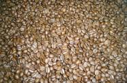 Mesmo durante a pandemia, Brasil mantém crescimento nas exportações de café solúvel