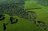 Suzano está entre as 100 empresas com melhor responsabilidade corporativa no Brasil