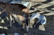 Polícia Ambiental detém criminosos por maus tratos a animais e porte de arma ilegal em Lorena