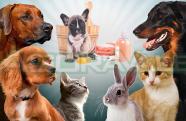 O cuidado com a higienização dos pets no novo normal trazido pela pandemia