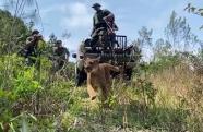 Polícia Ambiental encontra onça-parda em Paraibuna